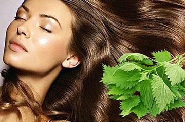 польза крапивы для волос