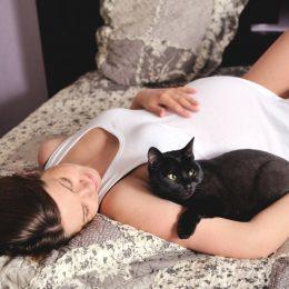 Беременность и кот